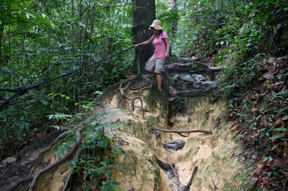 Тропинка в национальном парке Пенанга