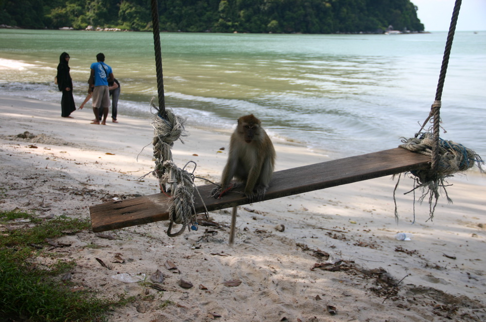 пляж monkey beach