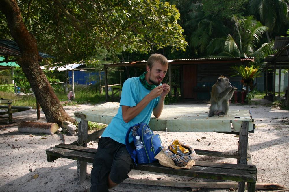 обезьяны на пенанге