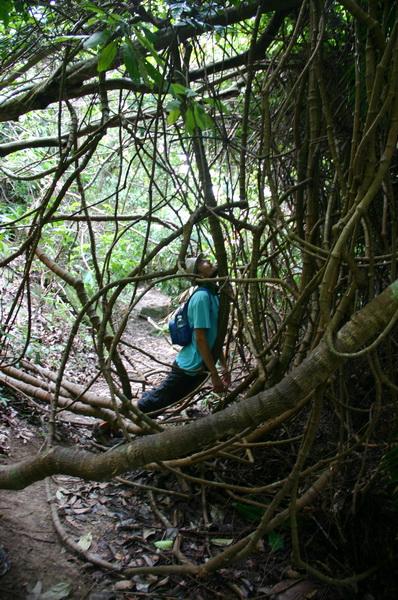 Лианы национальный парк Пенанг