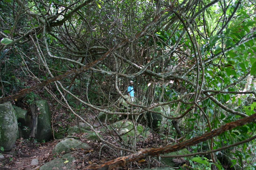 Джунгли национального парка Пенанг