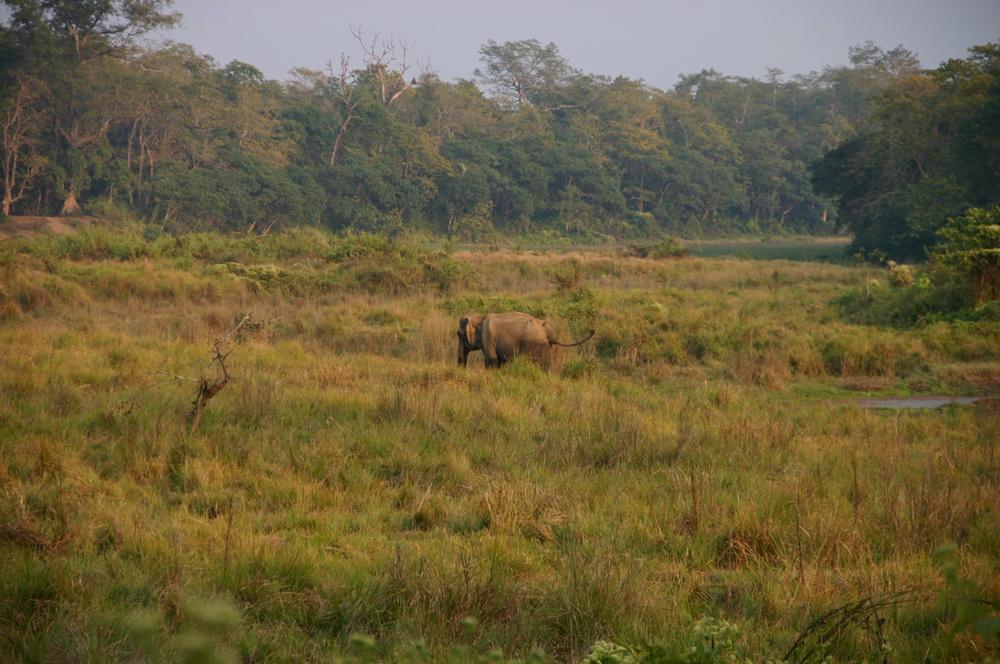 Старый слон Читван