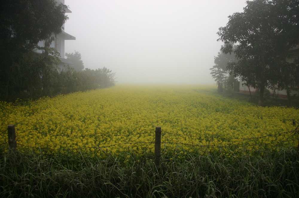 Желтые цветы Непал