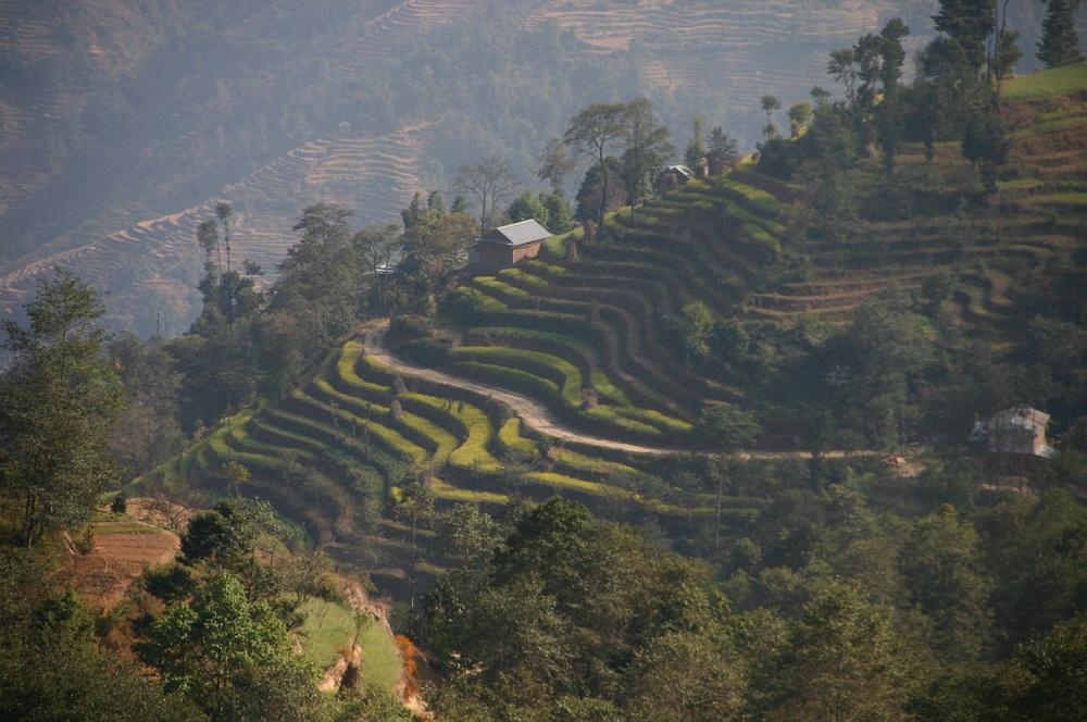 Поля в горах Непал