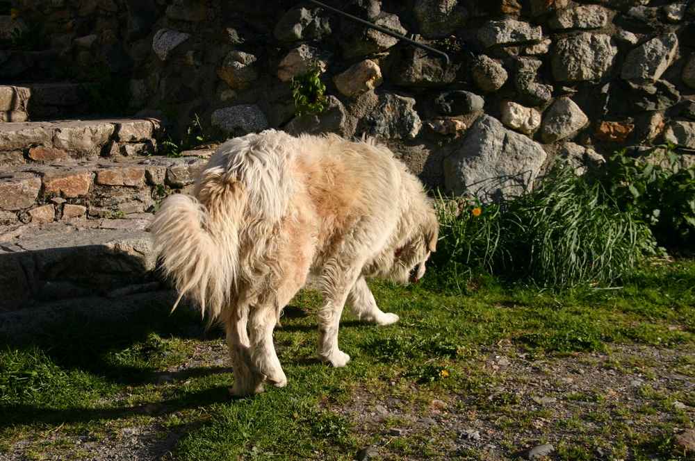 Собака в Валь-де-Бои